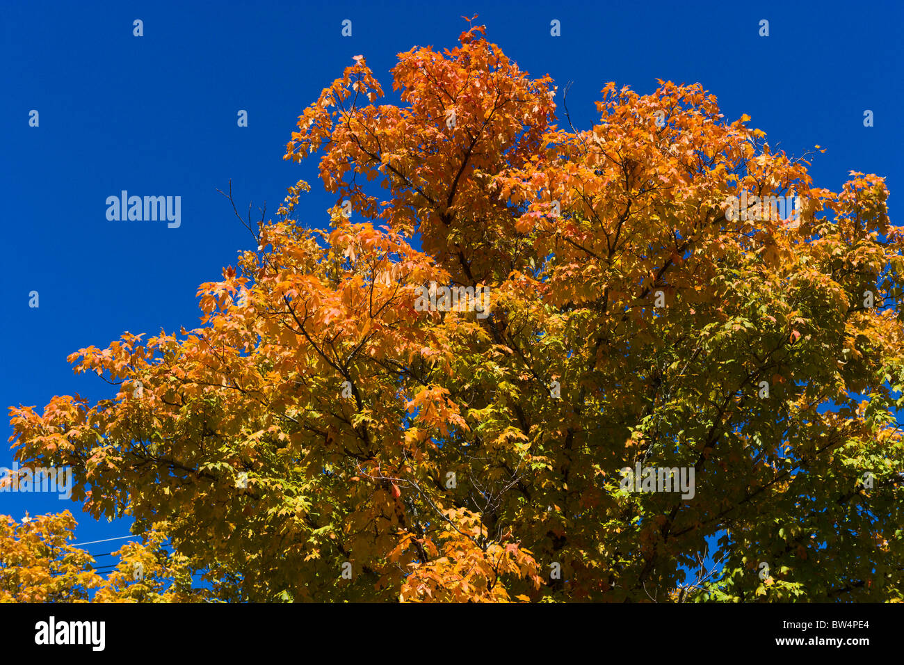 Fall foliage on Lookout Mountain, Chattanooga, Tennessee, USA - Stock Image