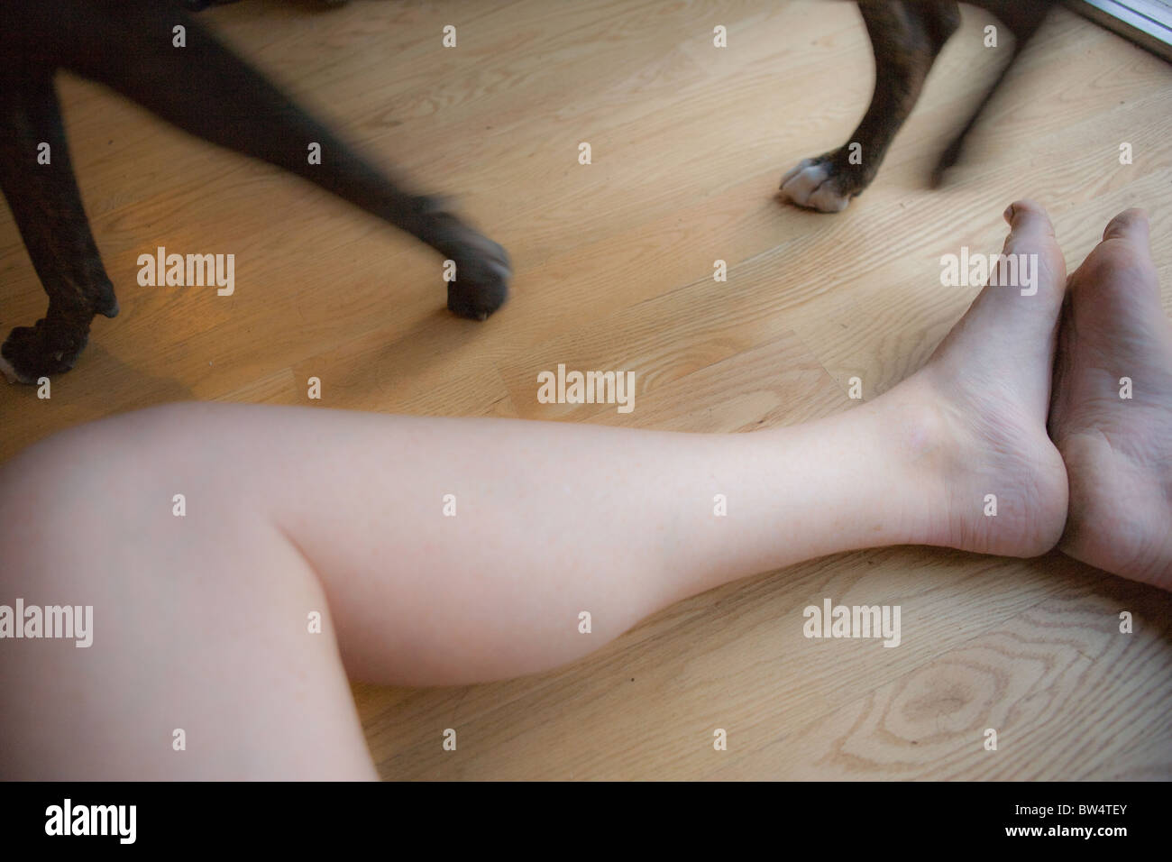 a woman's legs on wood floor with dog legs walking by - Stock Image