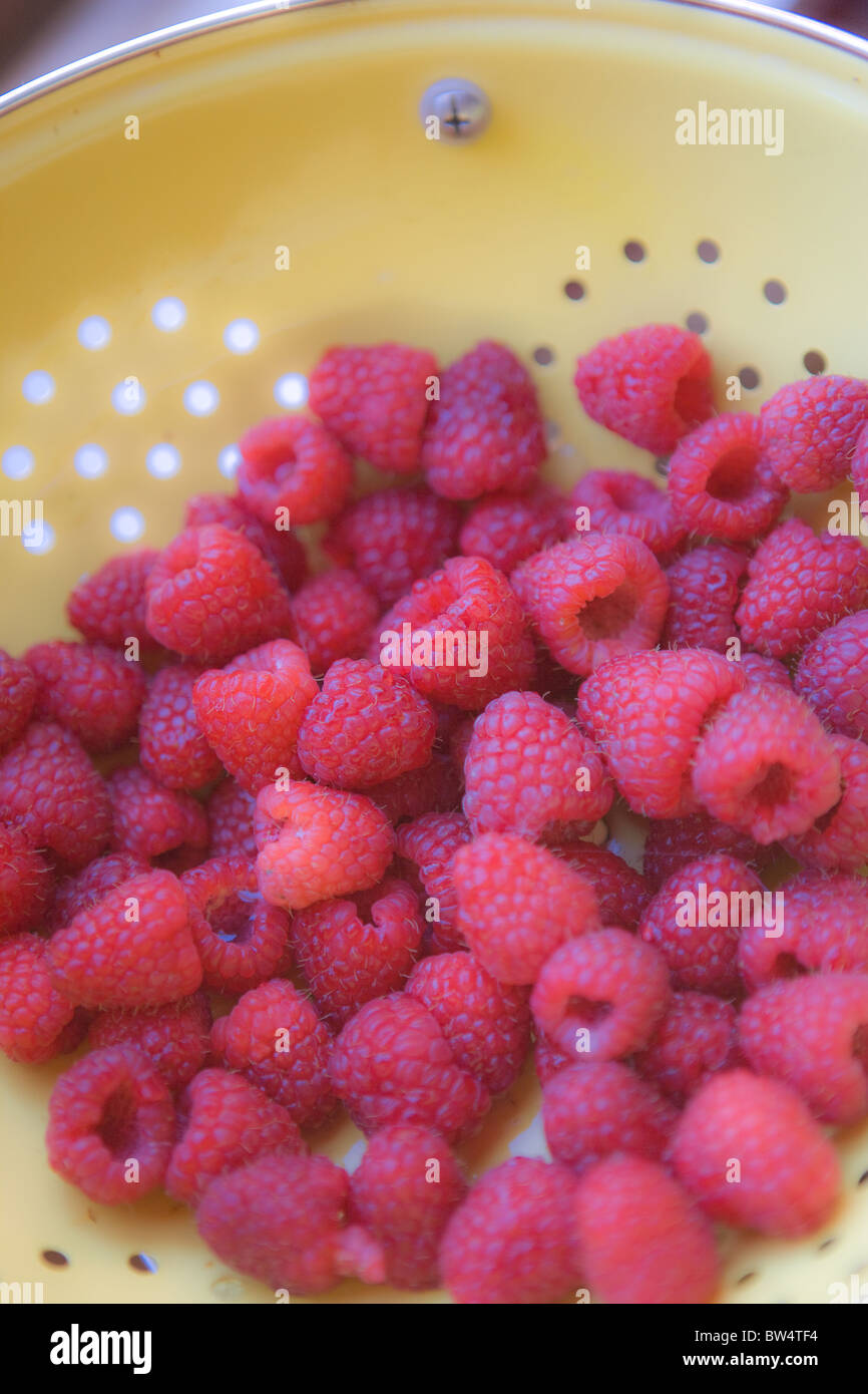 high angle view of red ripe raspberries in a yellow bowl - Stock Image