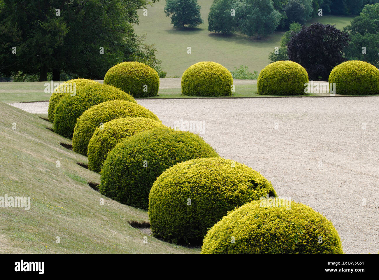 Rounded topiary evergreen Yew bushes in an English country garden. Surrey. England - Stock Image