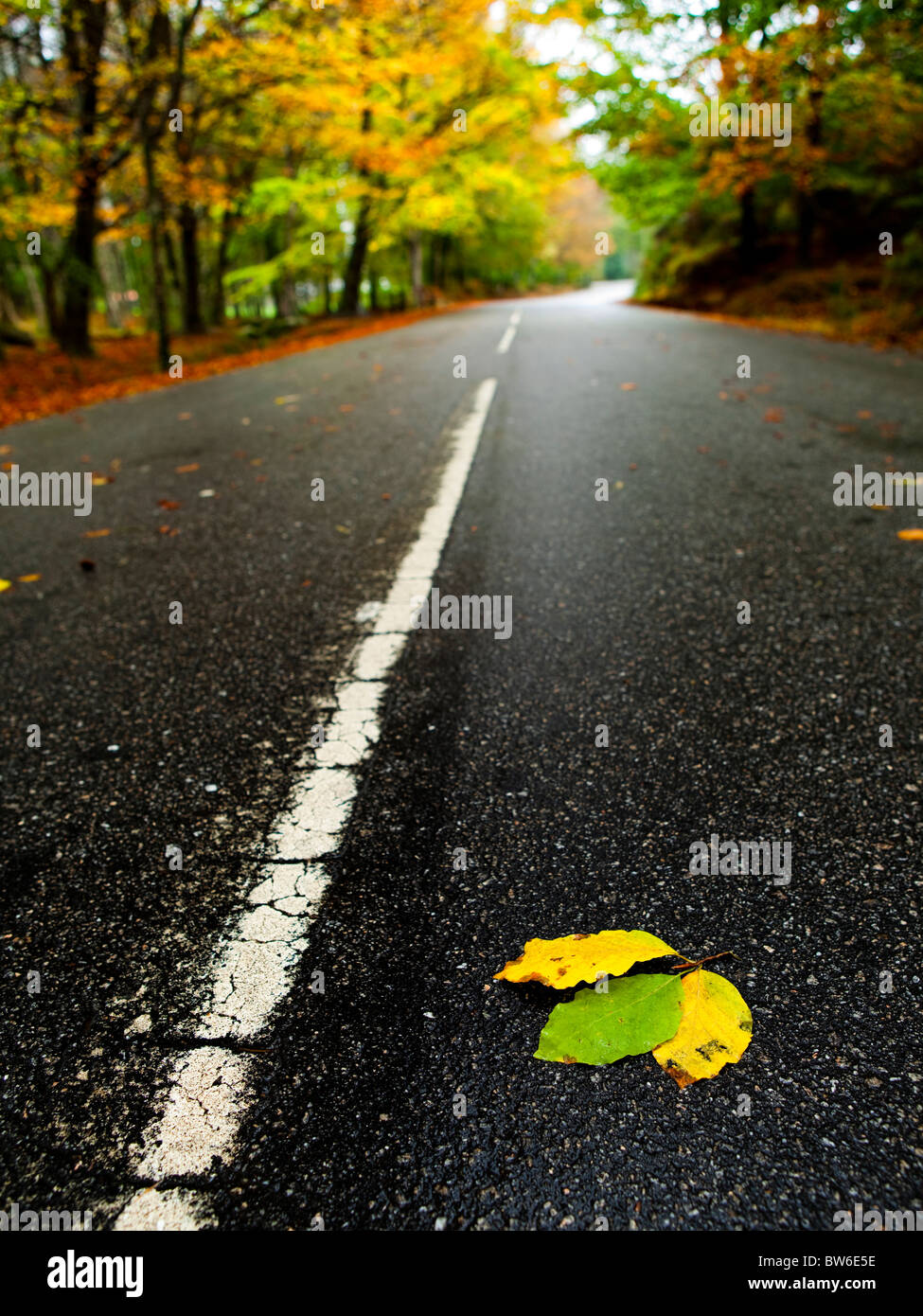 Beautiful road with some colored autumn leafs - Stock Image