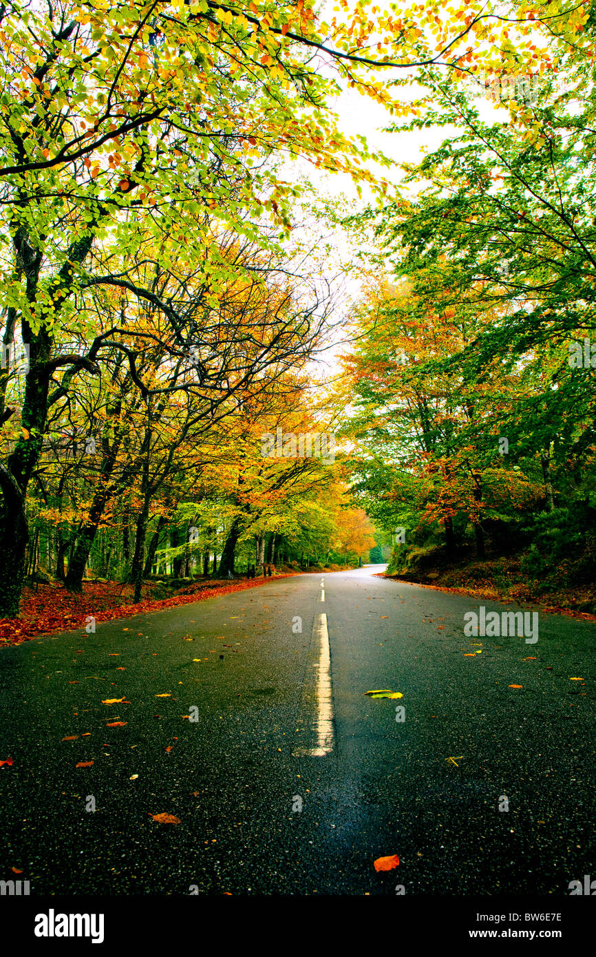 Autumn Road Colorful Maple Trees Stock Photos & Autumn Road Colorful ...