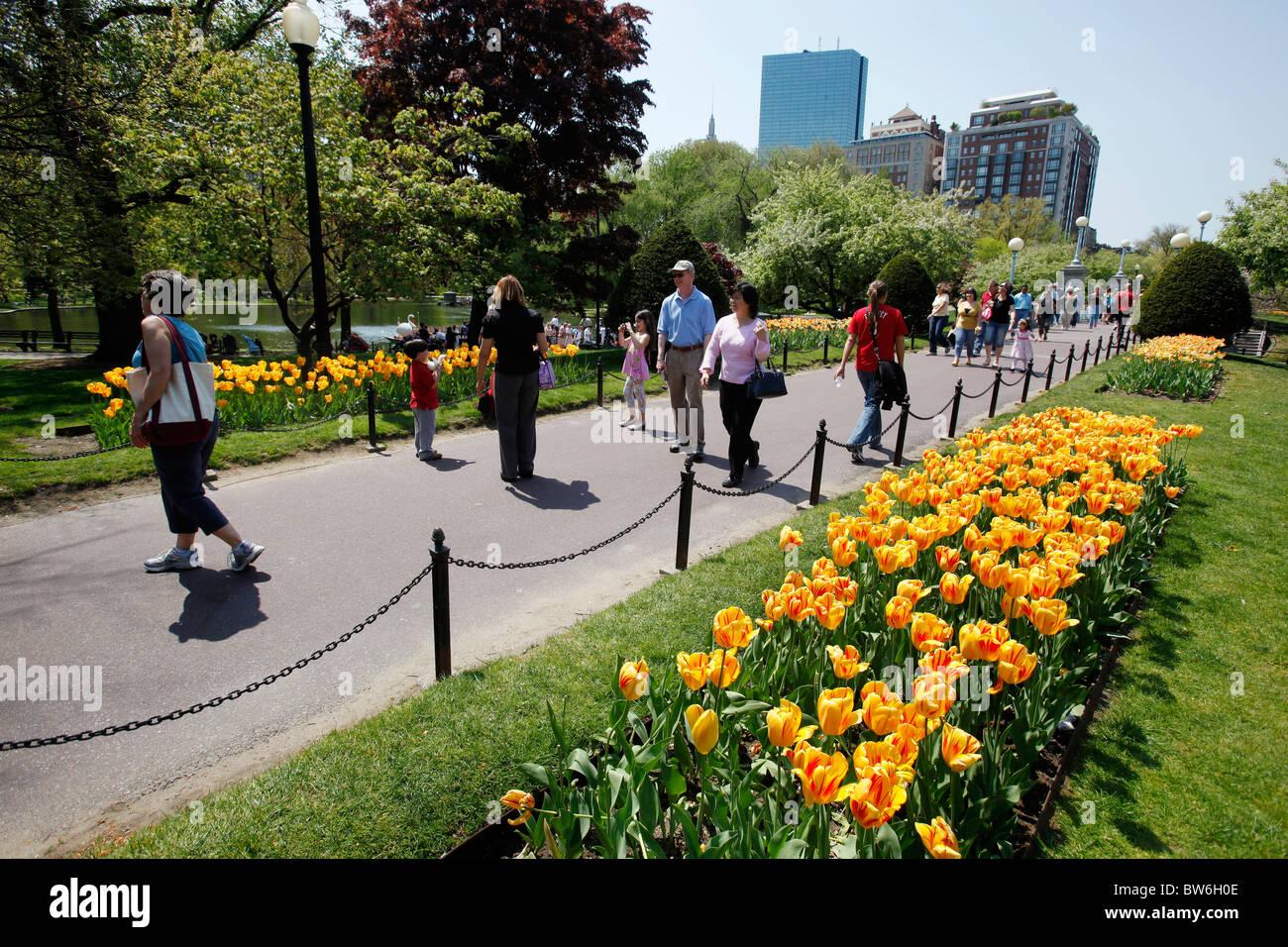 Tulips in the Public Gardens, Boston, Massachusetts - Stock Image
