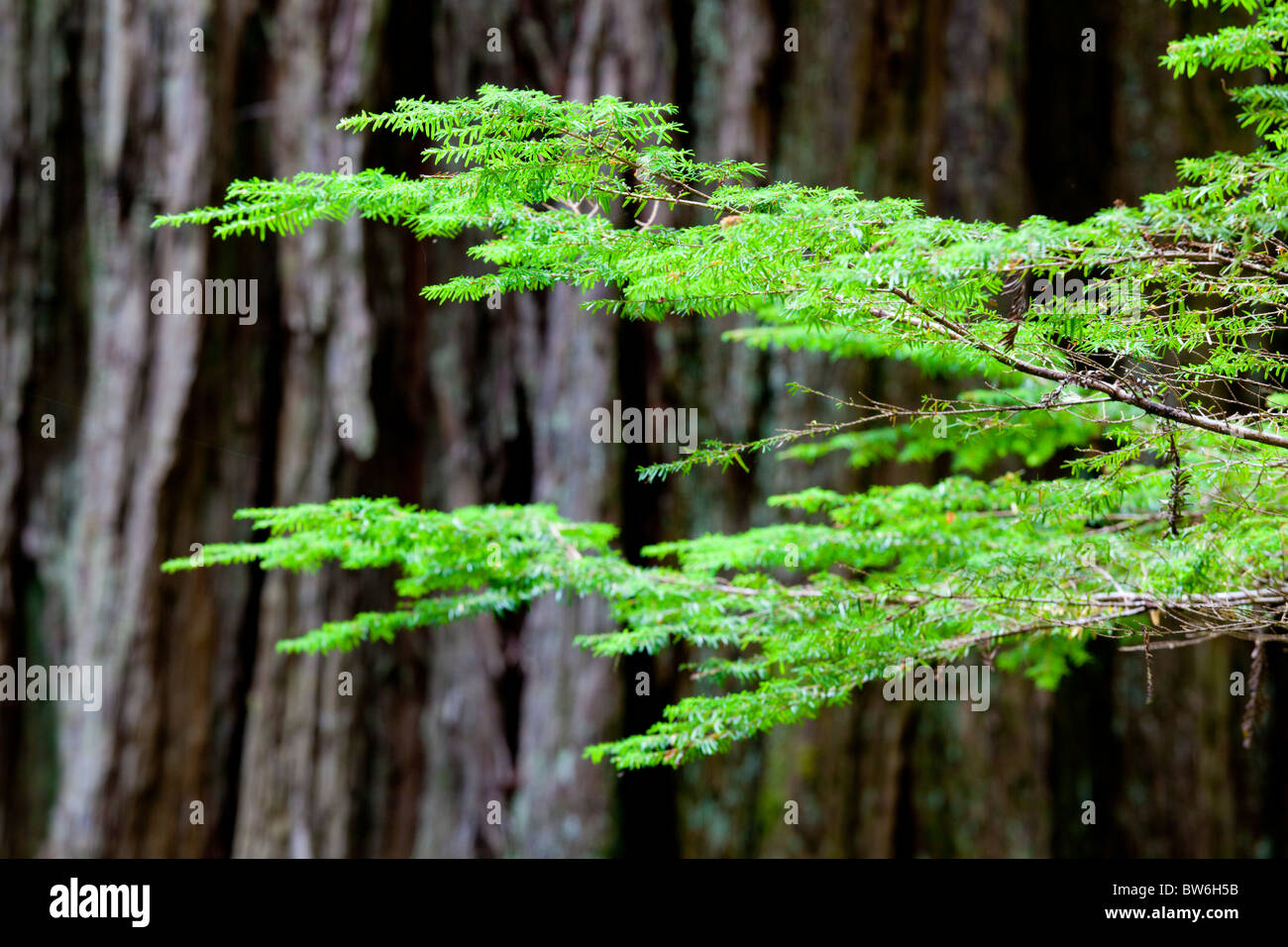 Branch and bark - Stock Image
