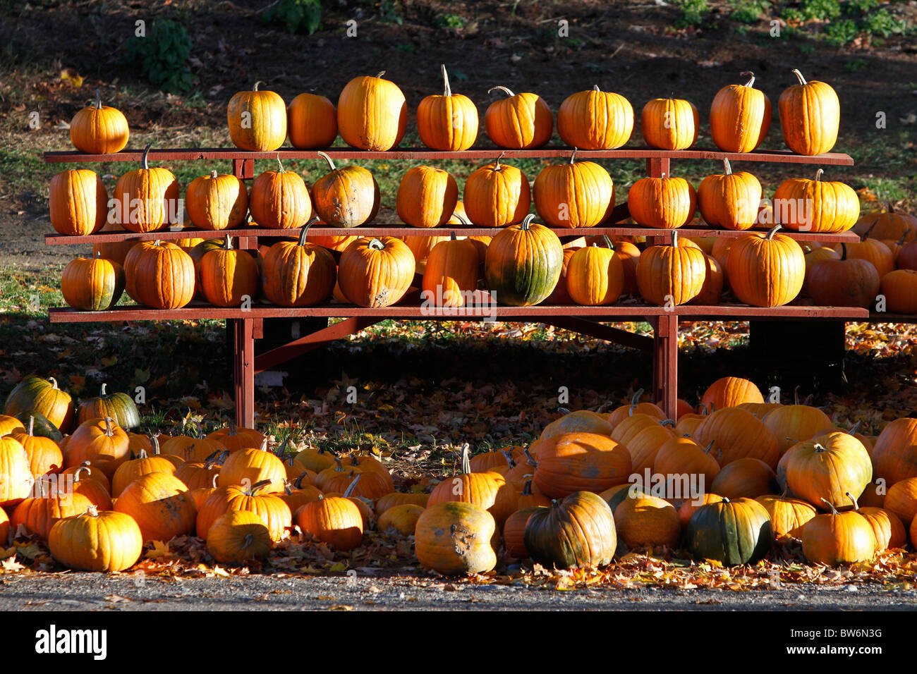 Farm stand pumpkins, The Berkshires, western Massachusetts - Stock Image