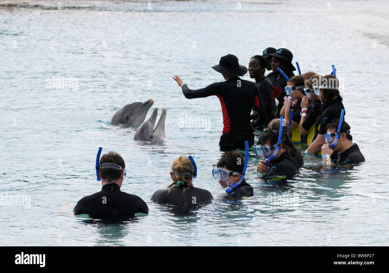 Swimming with dolphins interaction, Atlantis resort, Paradise Island, The Bahamas - Stock Image