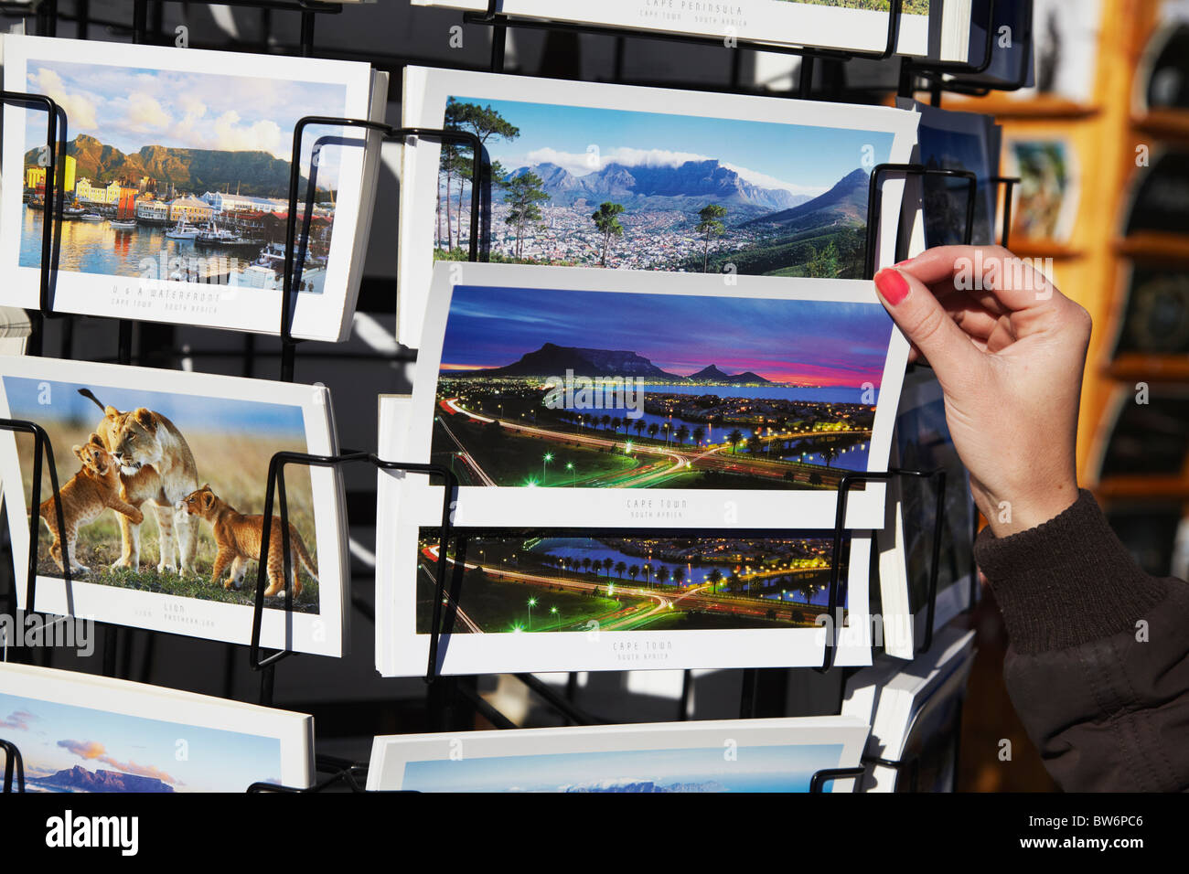 Woman looking at postcards at Victoria and Albert Waterfront, Cape Town, Western Cape, South Africa (MR) - Stock Image
