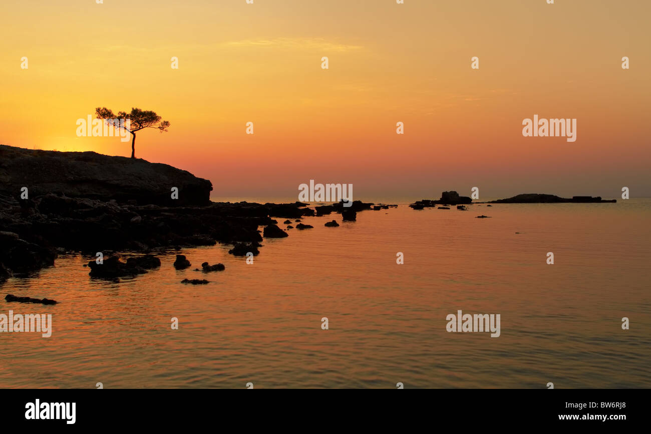 A beautiful Mediterranean sea sunrise with alone pine in the foreground - Stock Image
