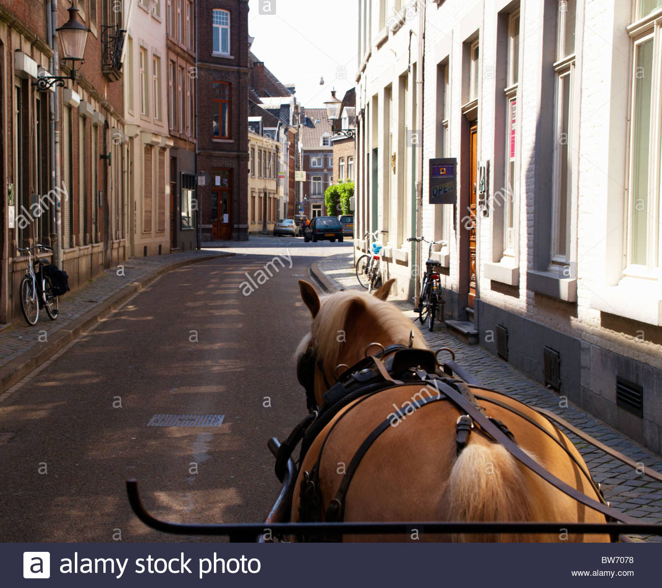 pony and trap sightseeing around the backstreets of maastricht limburg netherlands - Stock Image
