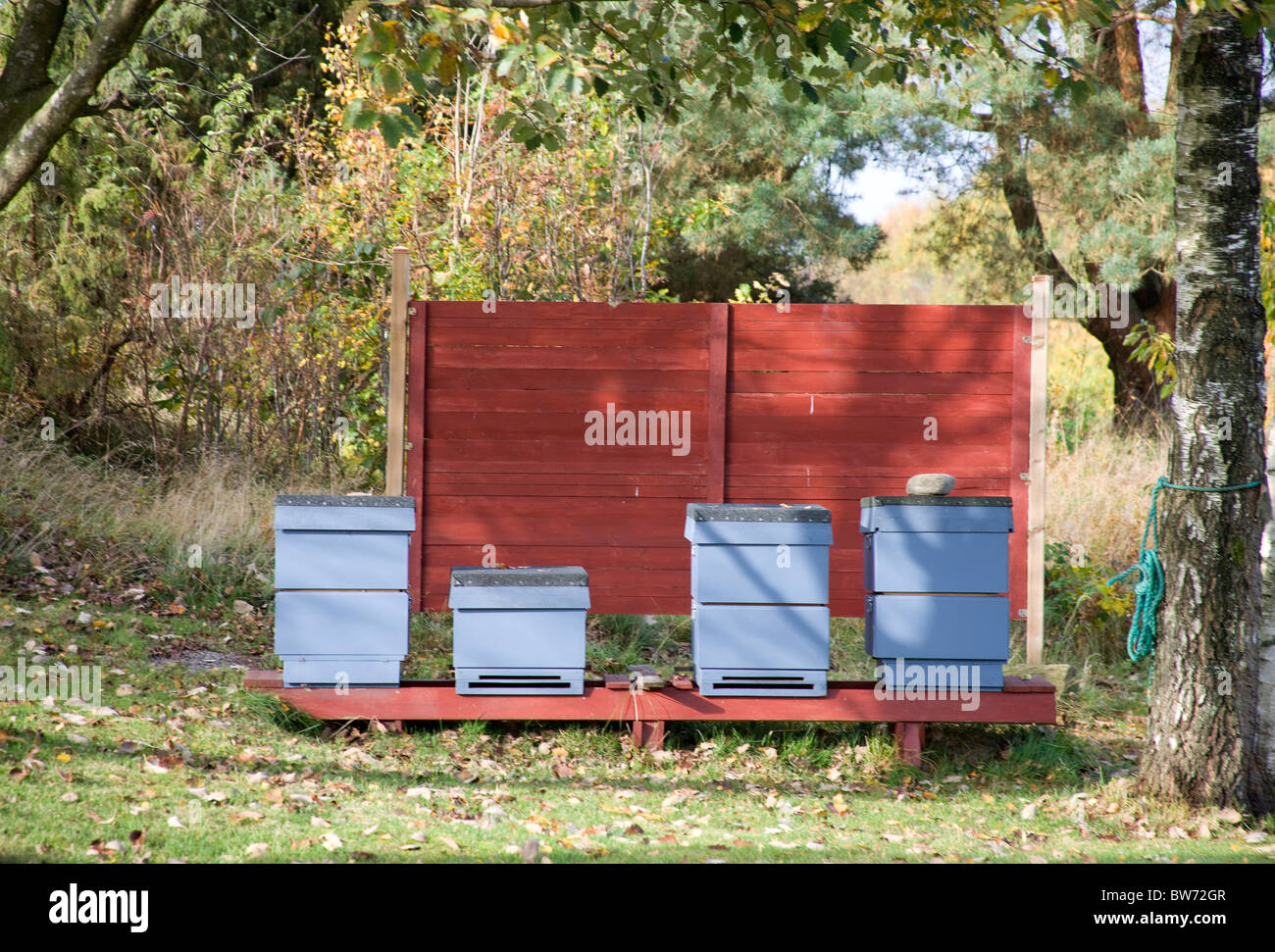 Bee hives positioned behind a wind brake. - Stock Image