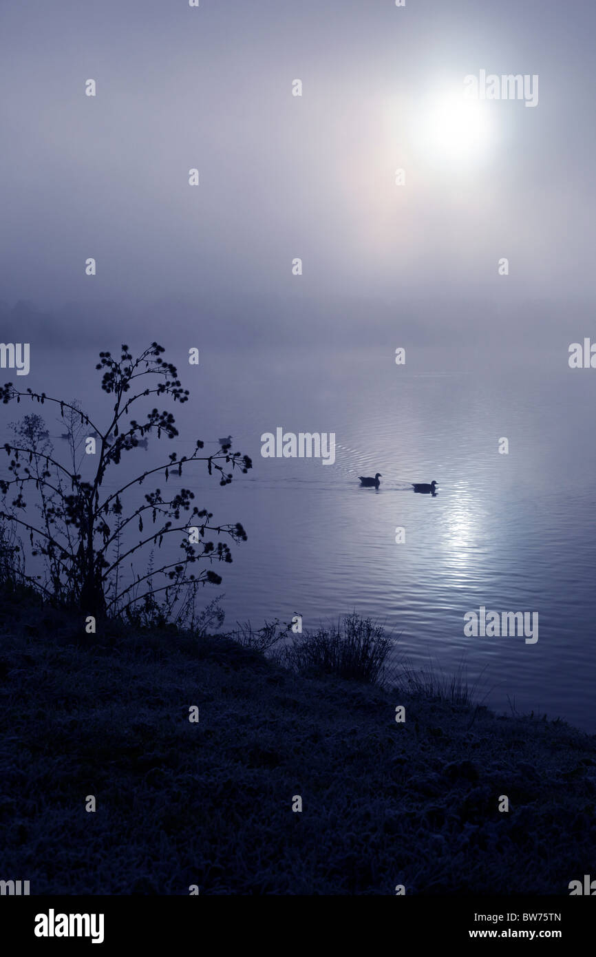 Two ducks swim across a dark misty lake - Stock Image