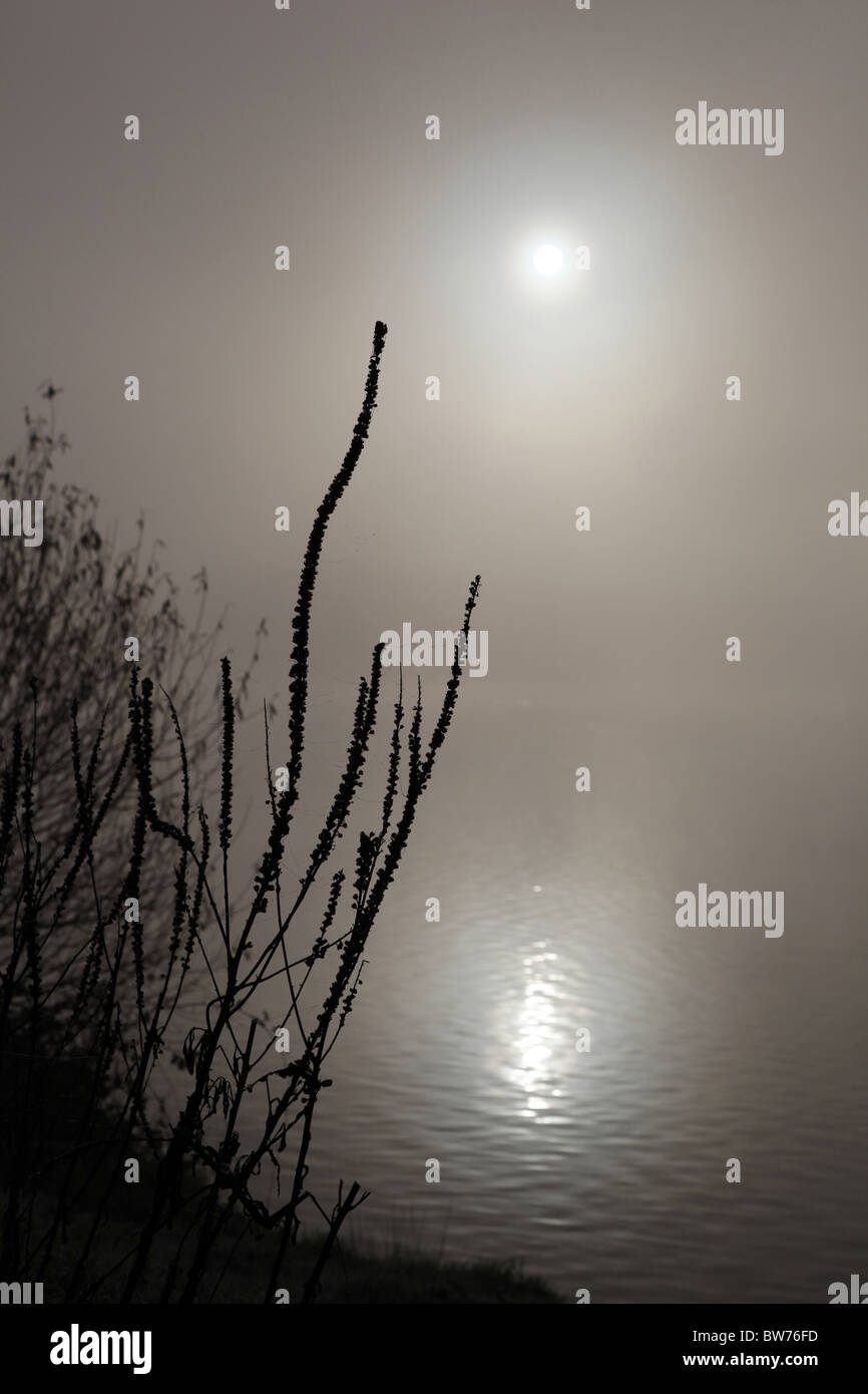 Silhouetted waterside plants with a backdrop the sun reflecting on a misty lake  dying - Stock Image