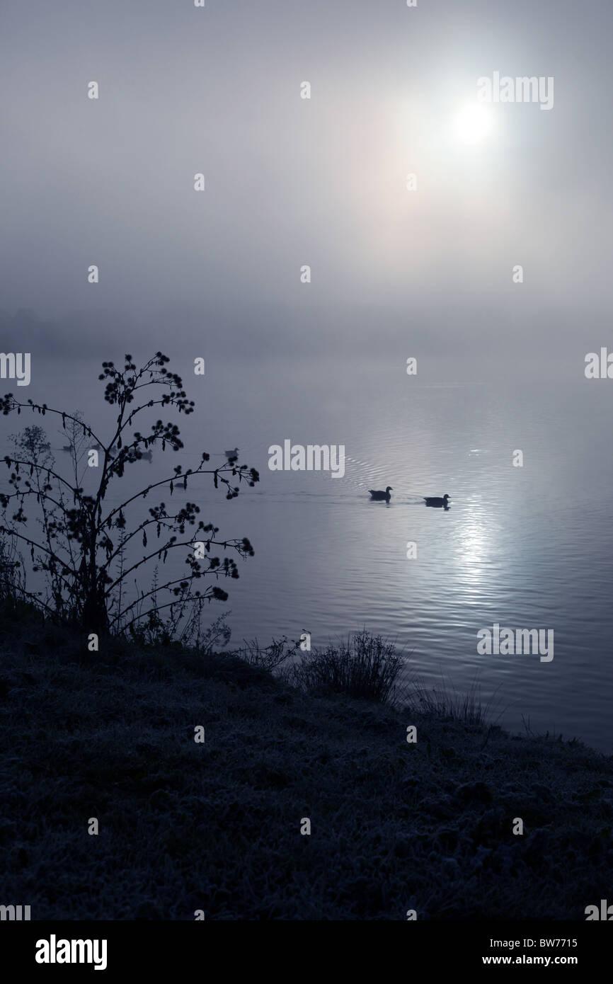 Two ducks swimming across a foggy lake - Stock Image