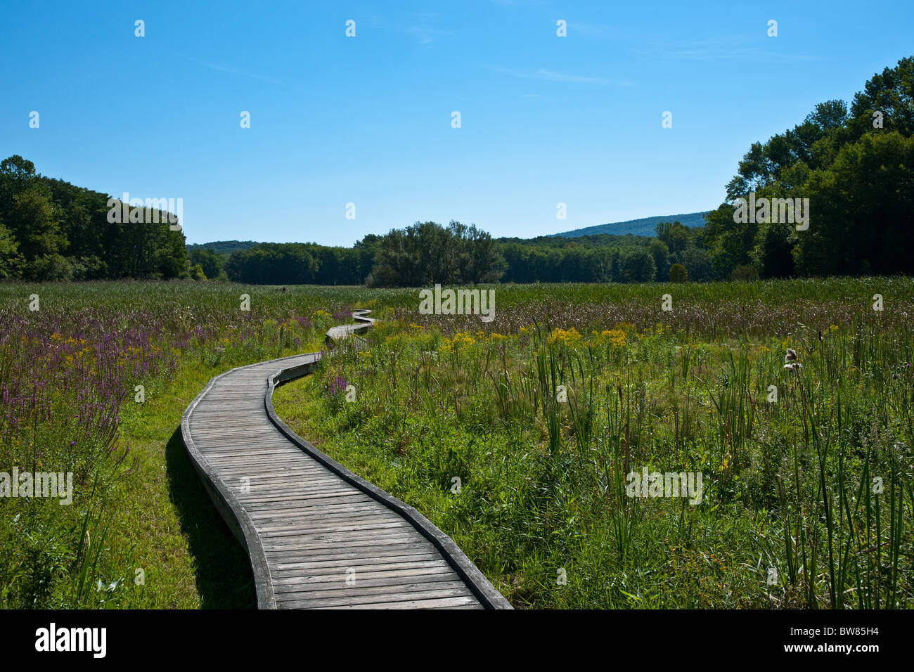 Wooden path of the Appalachian Trail - Stock Image
