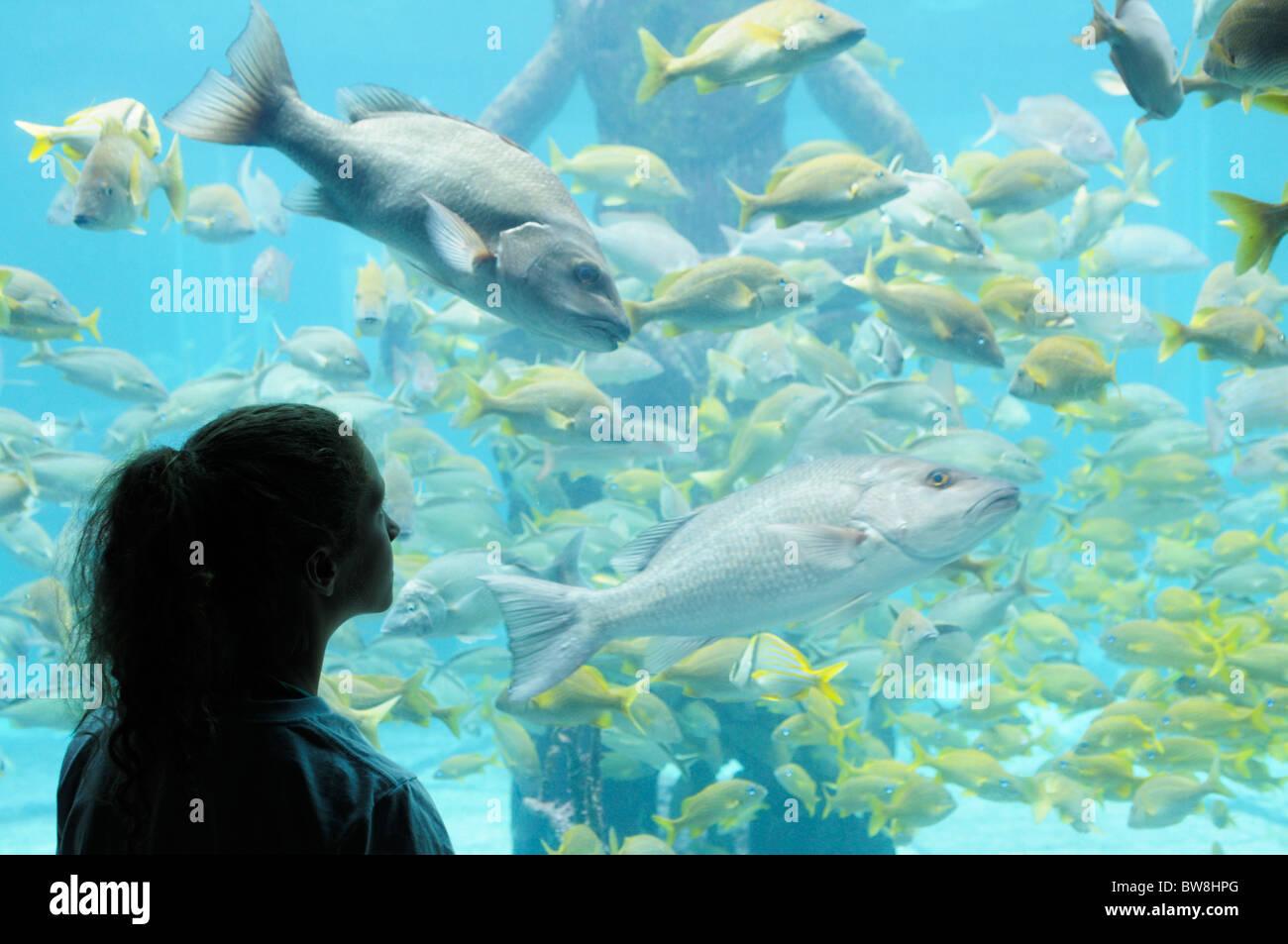 Girl watching fish in one of the many large aquarium tanks at the Atlantis resort, The Bahamas - Stock Image