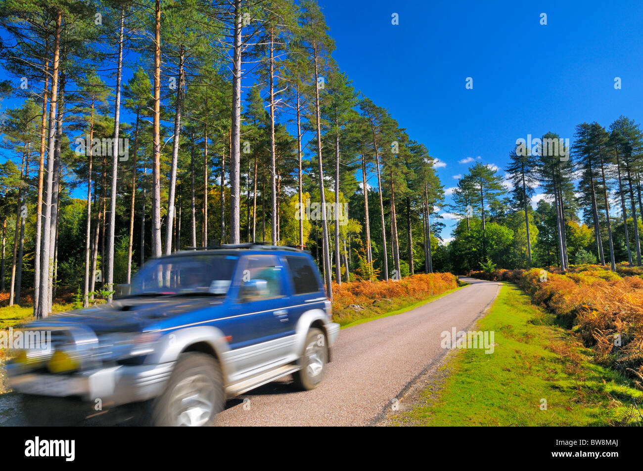 Vehicle passing through a scenic country road in the heart of the New Forest, Hampshire, UK - Stock Image