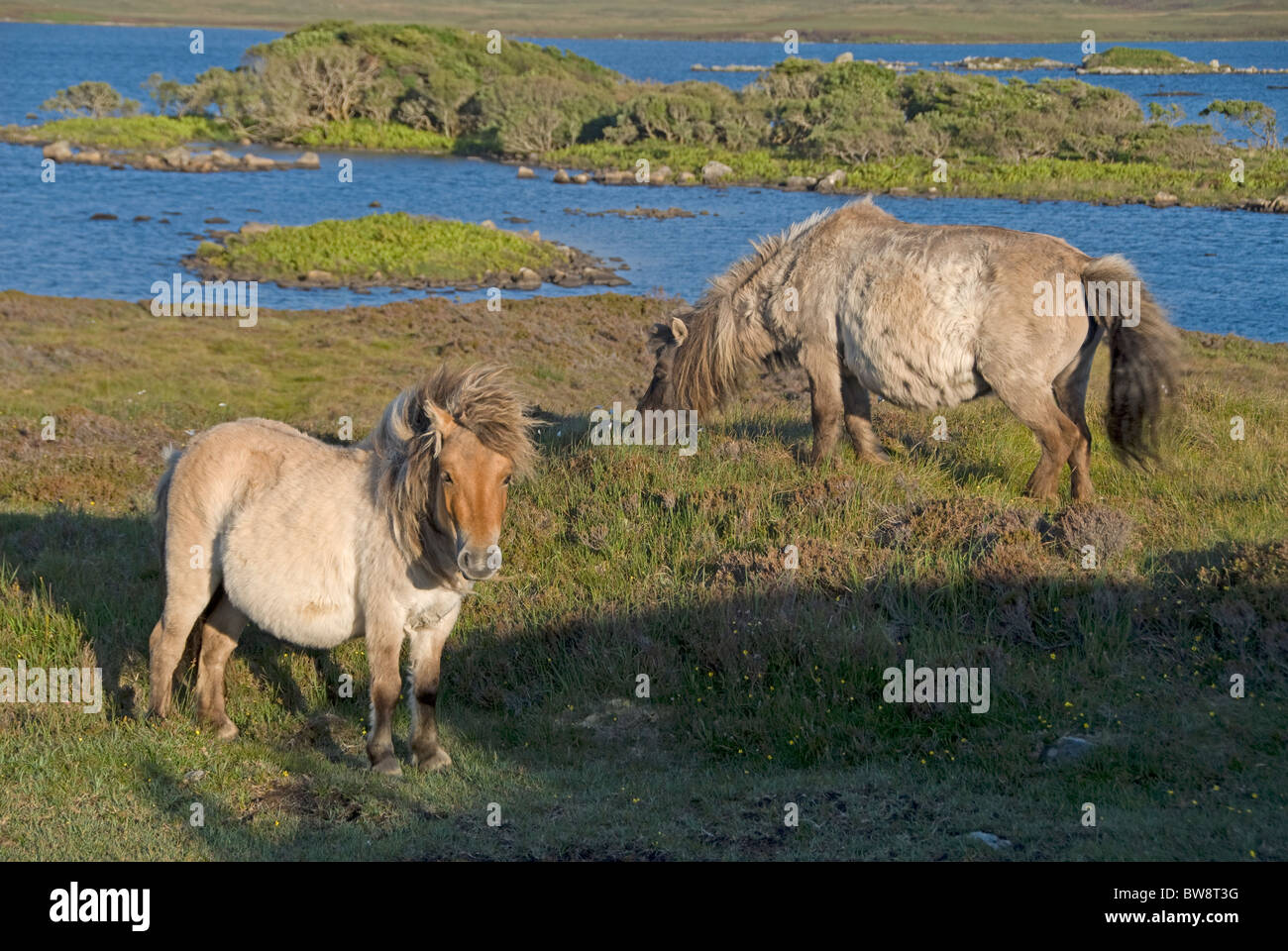 Loch Druidibeg South Uist, Outer Hebrides, Western Isles, Scotland.  SCO 6489 - Stock Image