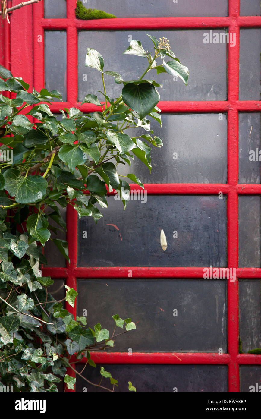 Red Telephone Box and Ivy - Stock Image