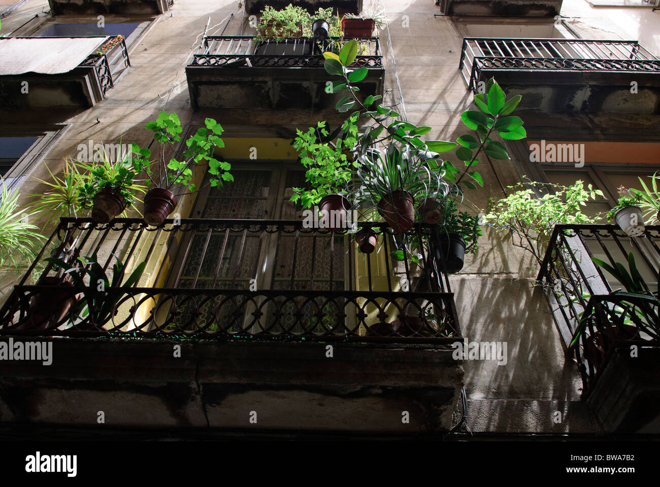 potted plants on balconies in alley in the 'barrio gotico', the old town of Barcelona, Spain - Stock Image