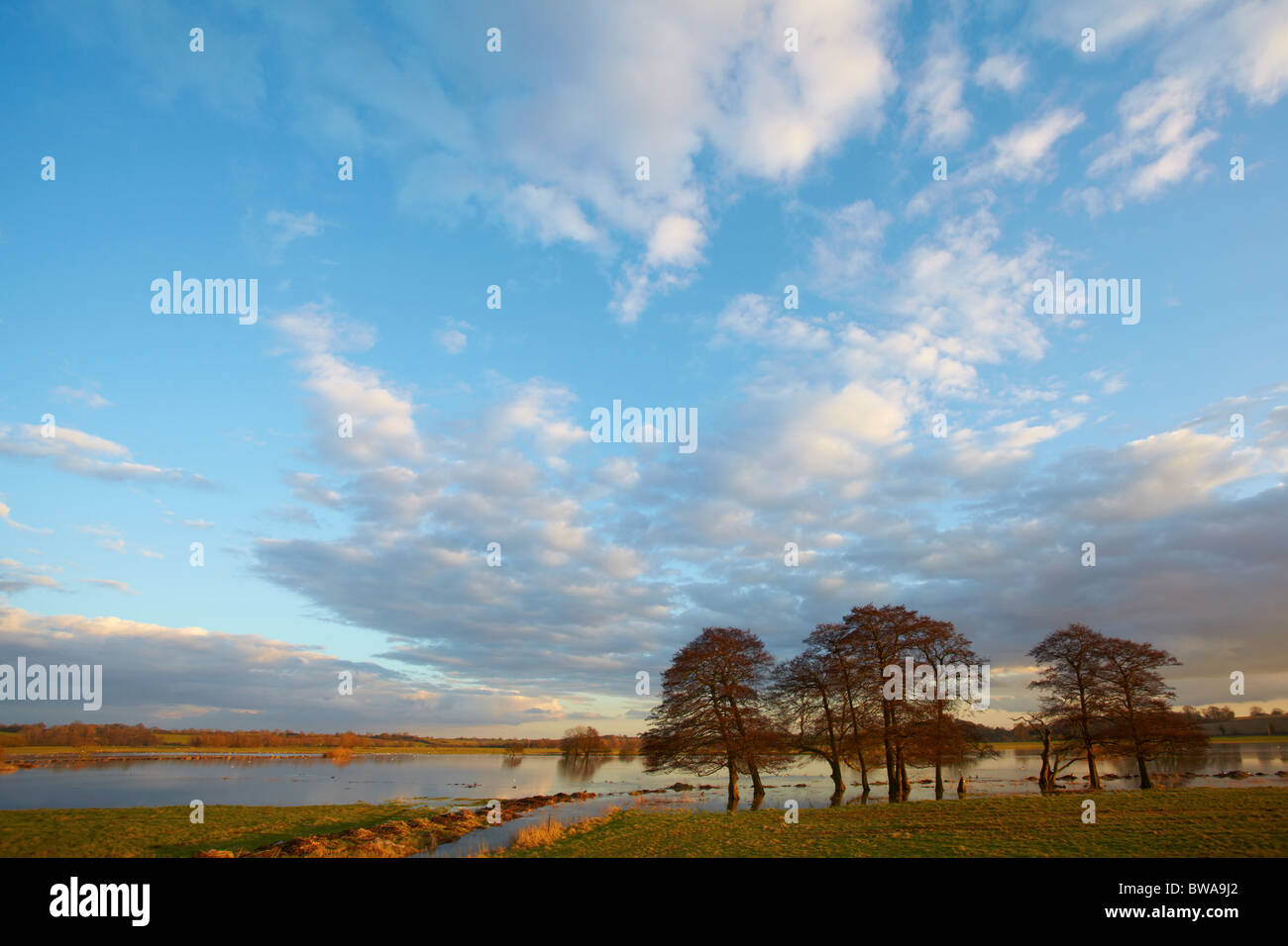 Flooded meadows in Norfolk, UK - Stock Image