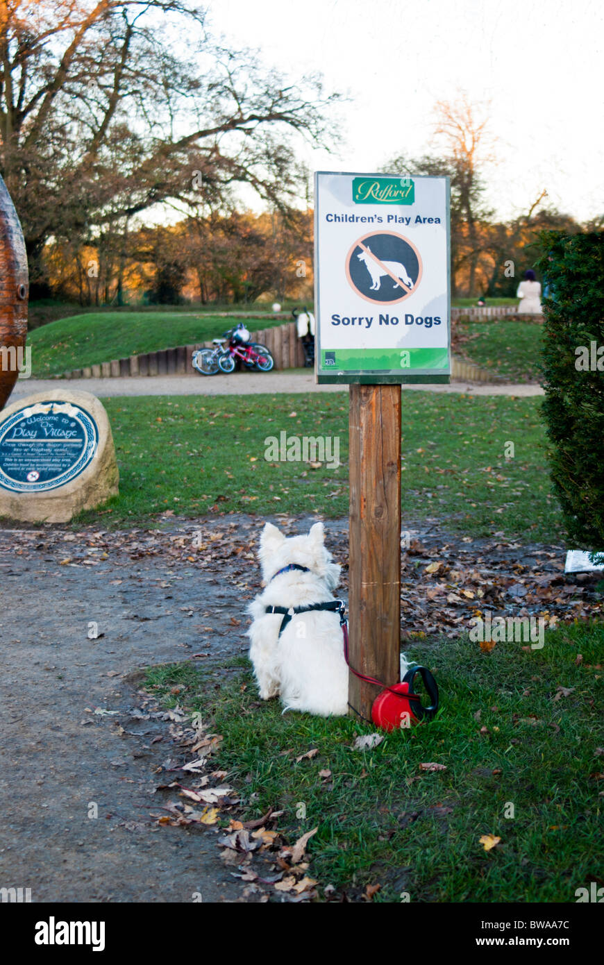 White West Highland terrier secured to a no dogs sign. - Stock Image