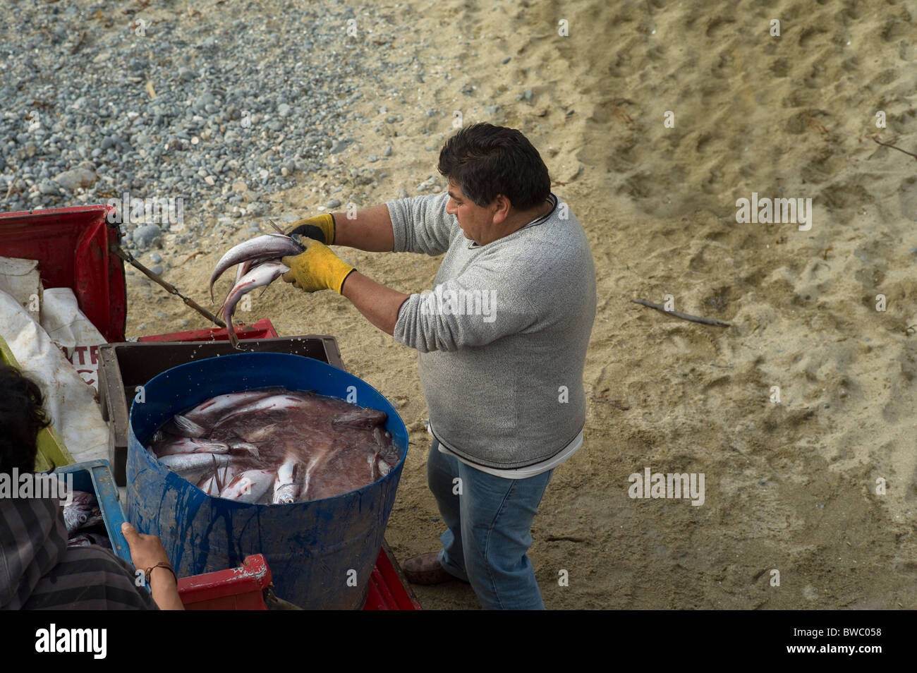 Man cleaning fish in a coastal village, Quintay, Chile - Stock Image