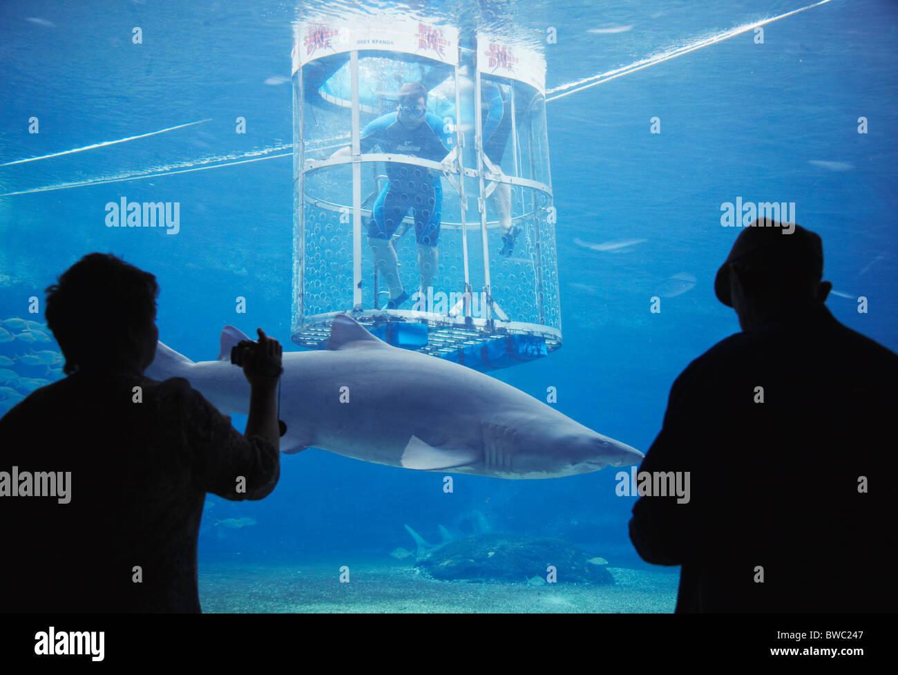 Woman filming people cage diving in shark aquarium at uShaka Marine World, Durban, KwaZulu-Natal, South Africa - Stock Image