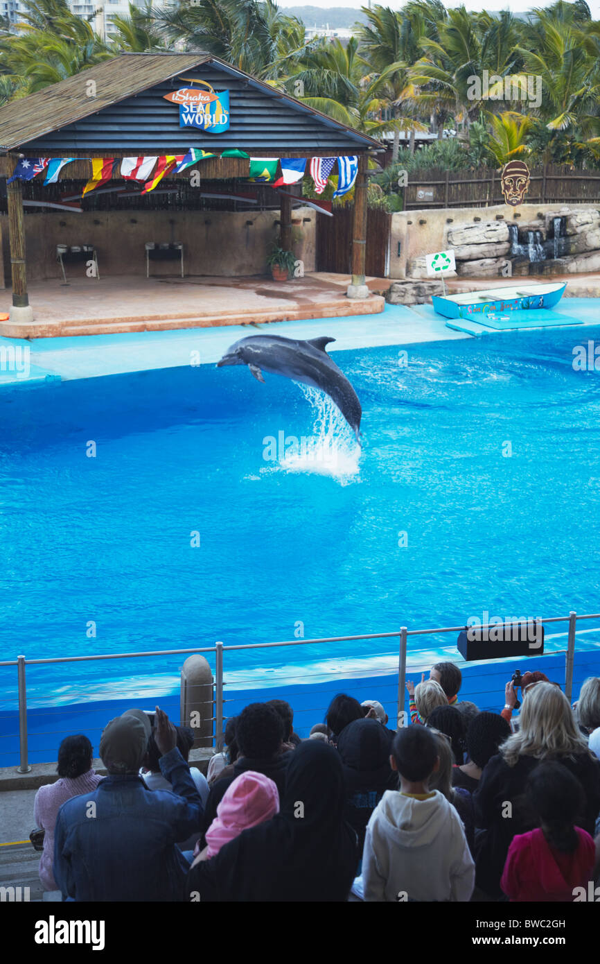 Dolphin show at uShaka Marine World, Durban, KwaZulu-Natal, South Africa - Stock Image