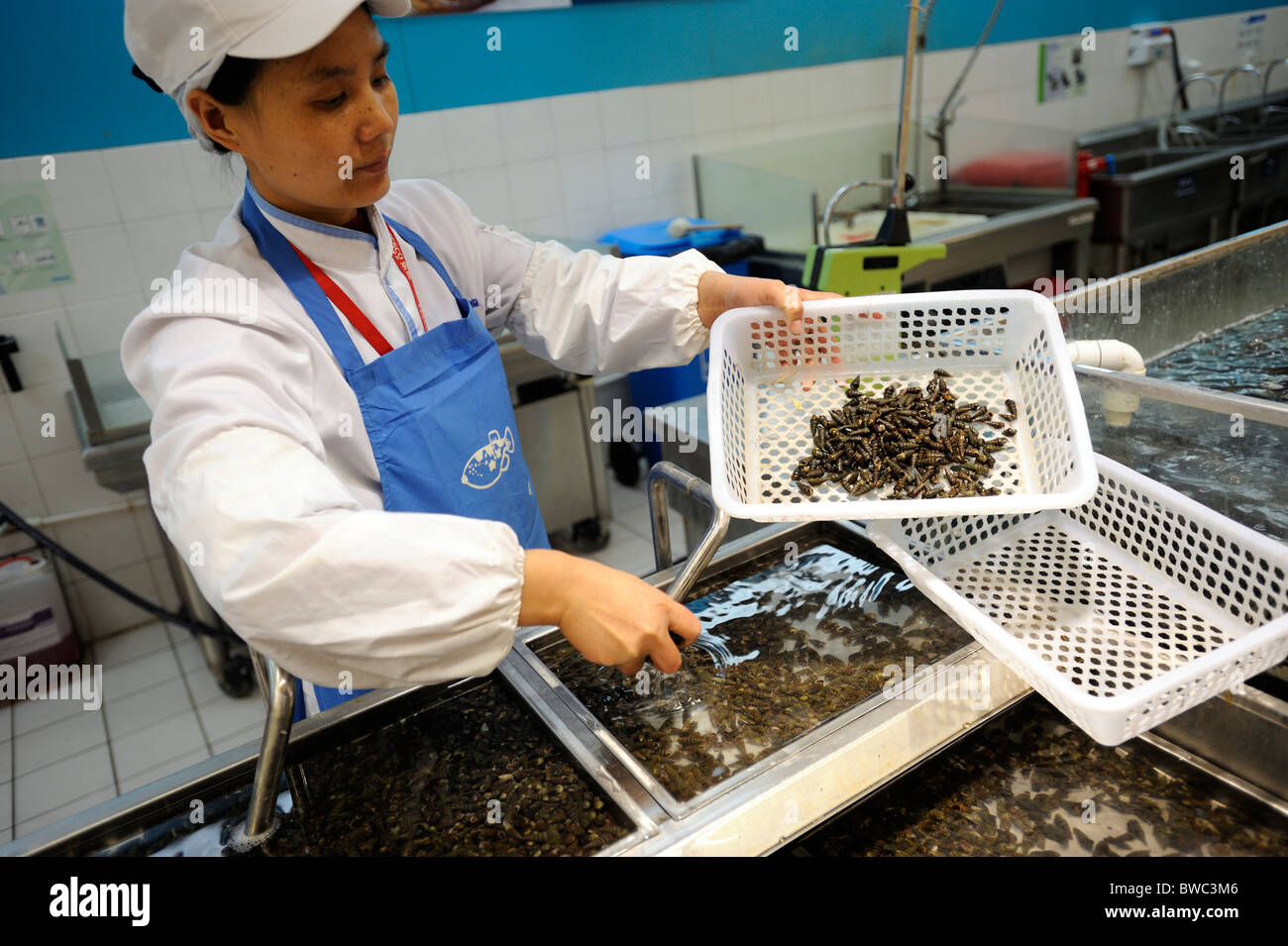 Live shells are on sale in Qingdao Tesco, Shandong province, China. 11-Nov-2010 - Stock Image