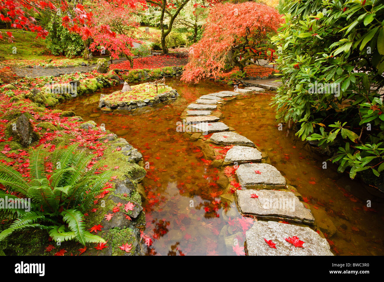 Japanese garden section of Butchart Gardens in autumn-Victoria Stock ...