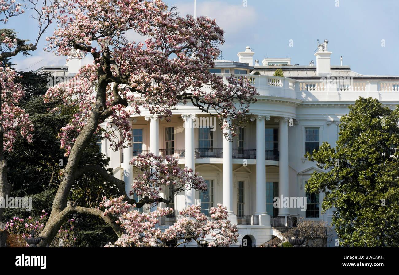 Washington Dc The White House In Spring Springtime With Magnolia