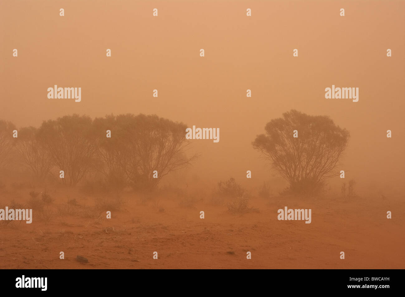 Dust storm in the central Australian desert, covering the landscape and all in it with fine red dust Stock Photo