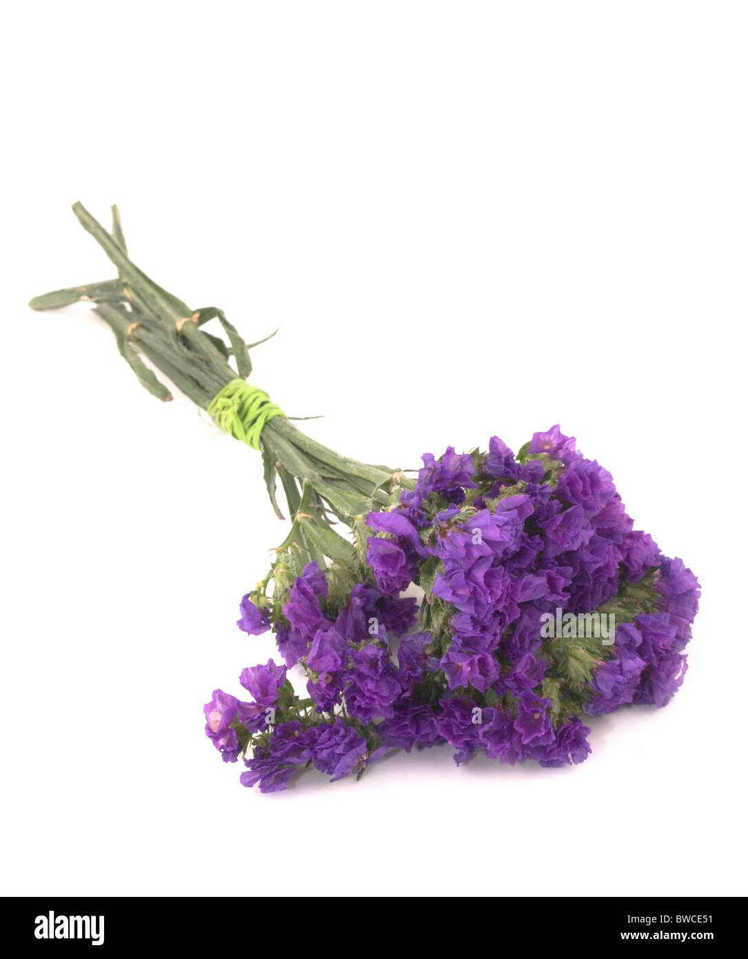 Small bouquet of purple statice flowers on white background - Stock Image