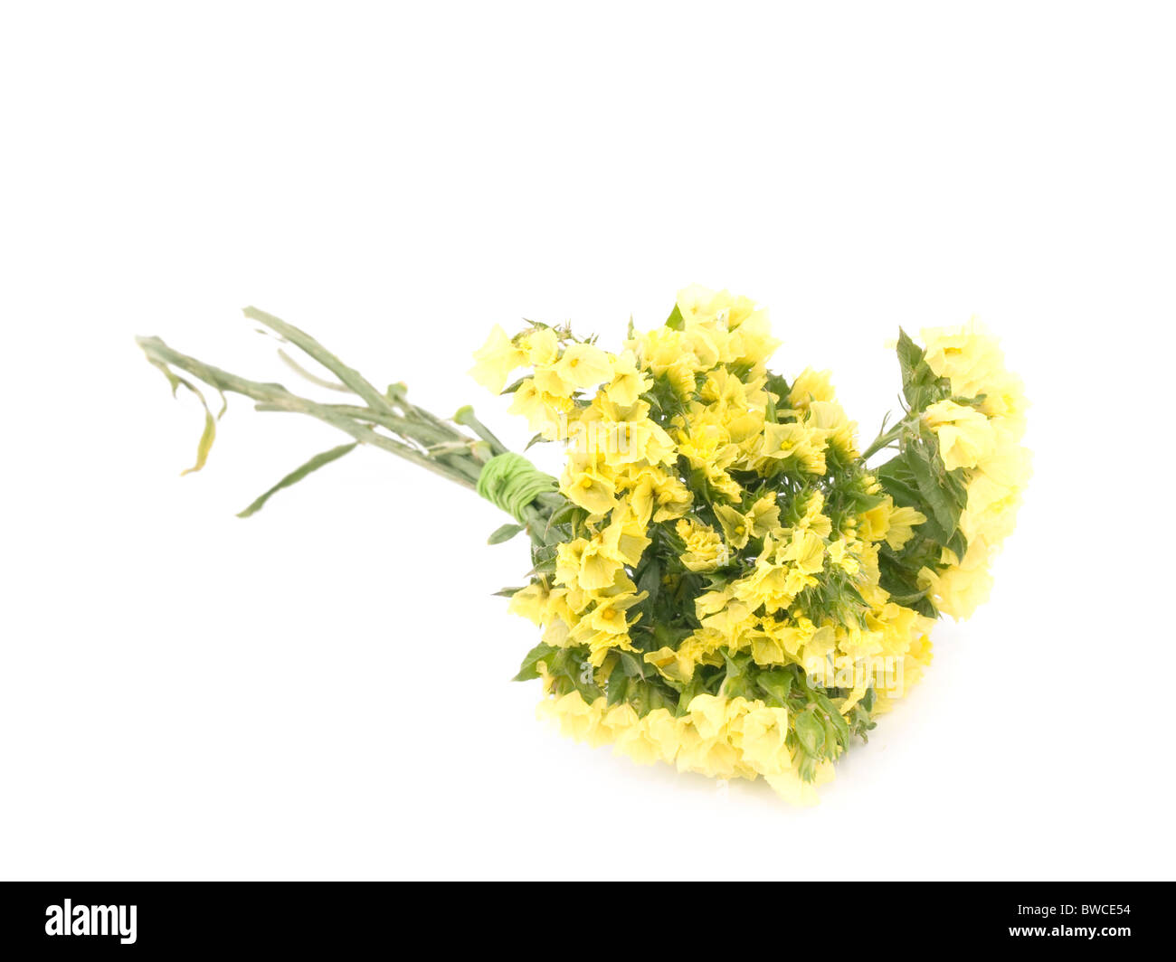 Statice flower stock photos statice flower stock images alamy small bouquet of yellow statice flowers on white background stock image mightylinksfo