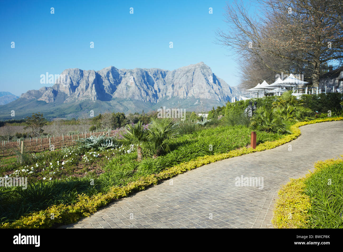 Delaire Wine Estate, Stellenbosch, Western Cape, South Africa - Stock Image