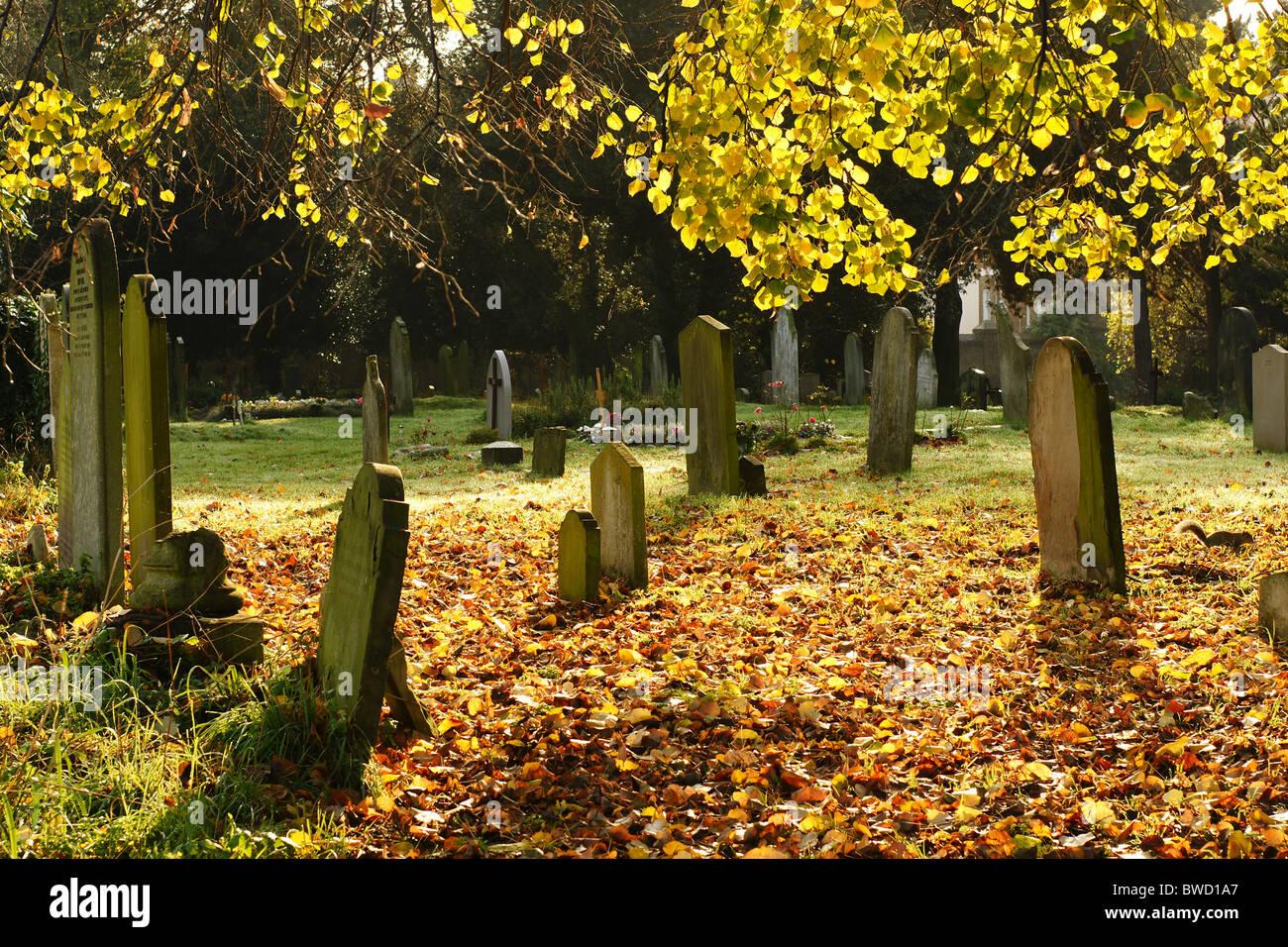 Autumn at Brompton Cemetery, Chelsea, London Stock Photo