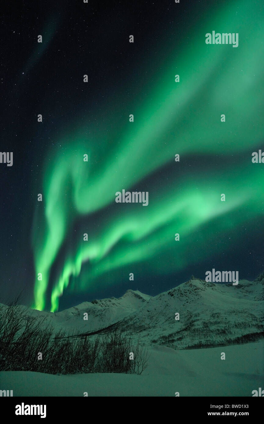 A powerful outburst of Northern Lights (Aurora Borealis) on the island Kvaloya close to Tromso, North Norway Stock Photo