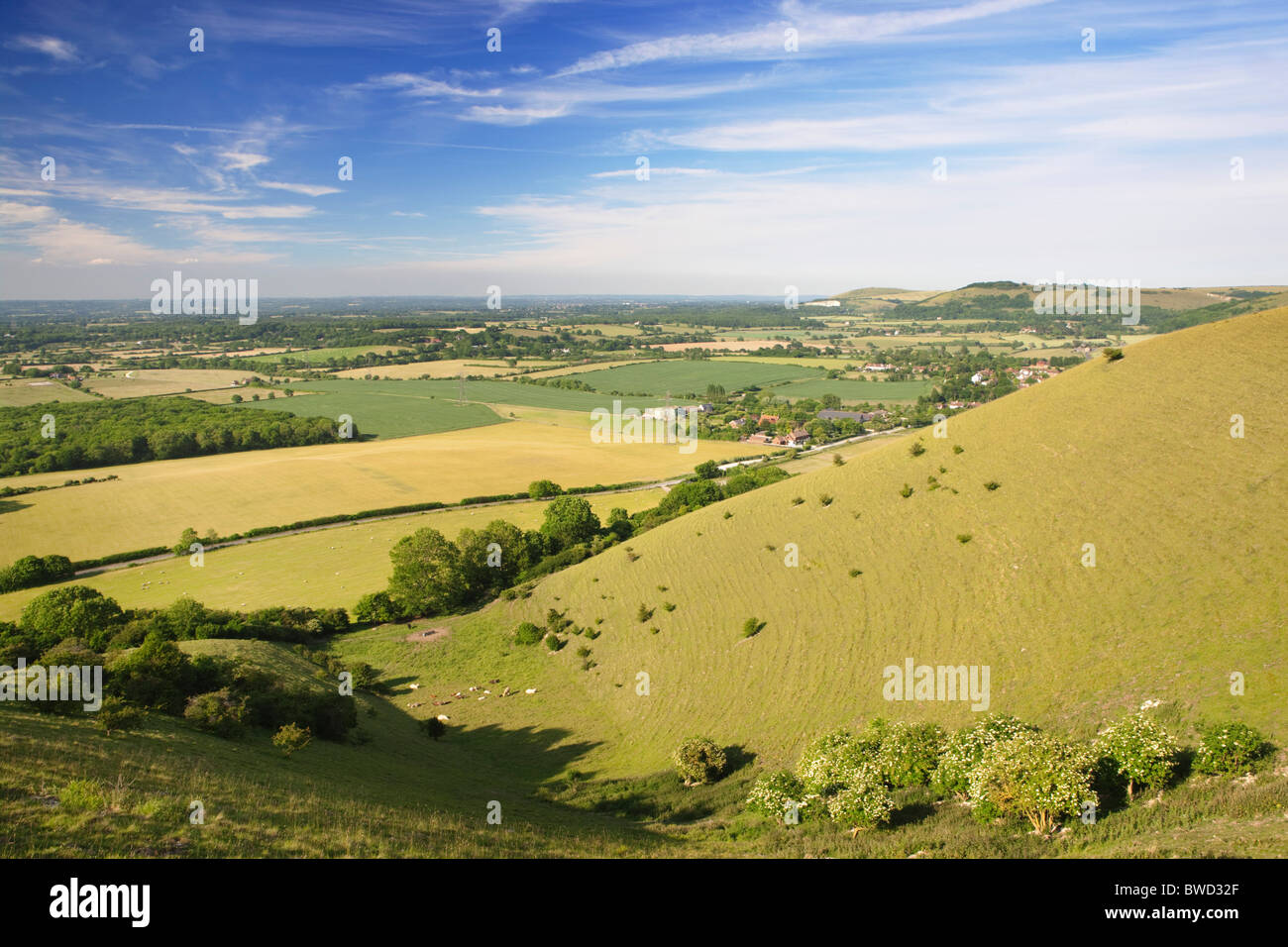 South Downs; West Sussex; England, Great Britain - Stock Image