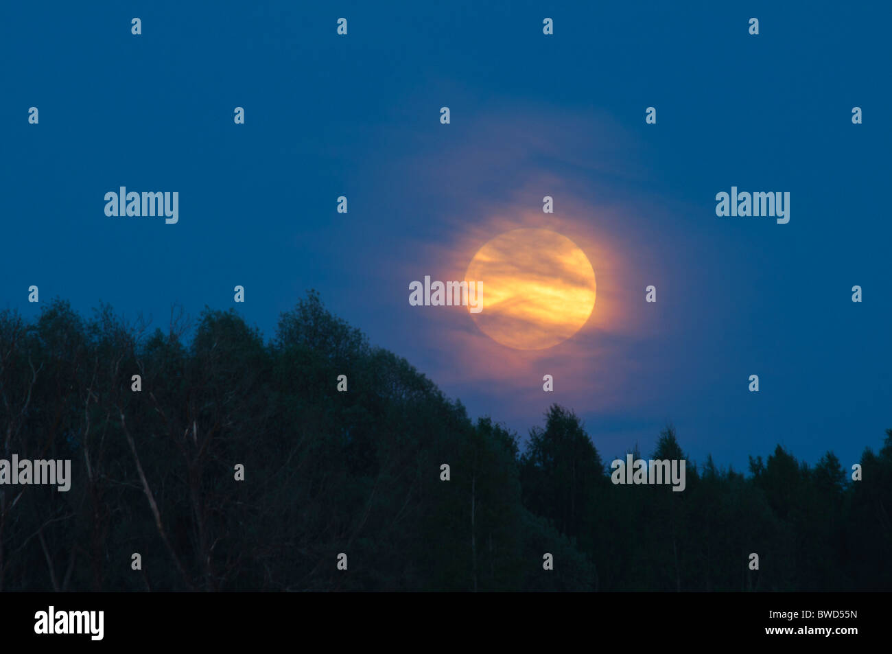 Full Moon over forest Stock Photo