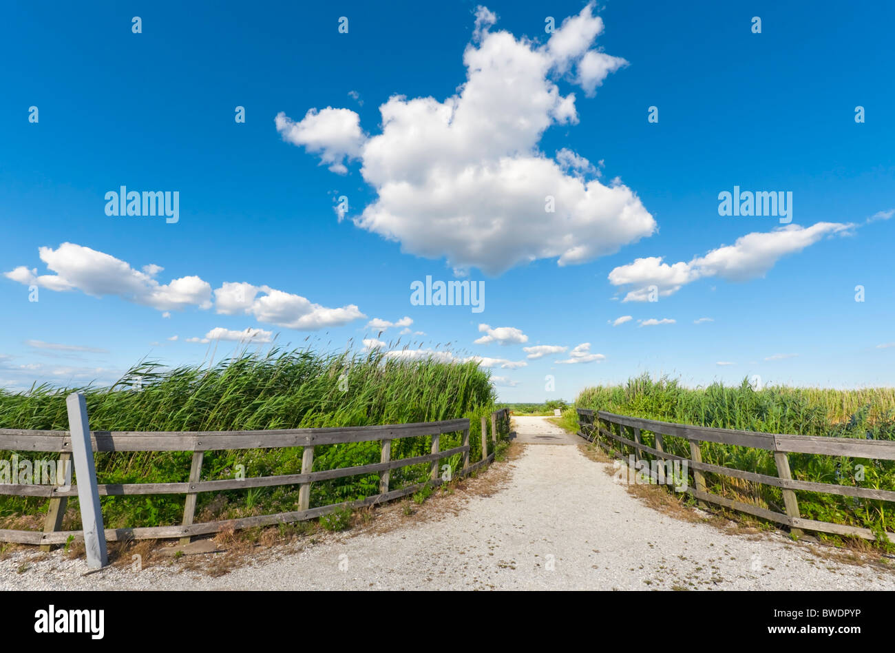 Stone pebble Path between two curving wood fences around marsh Reeds beautiful clouds marshland in Merrick, Long - Stock Image