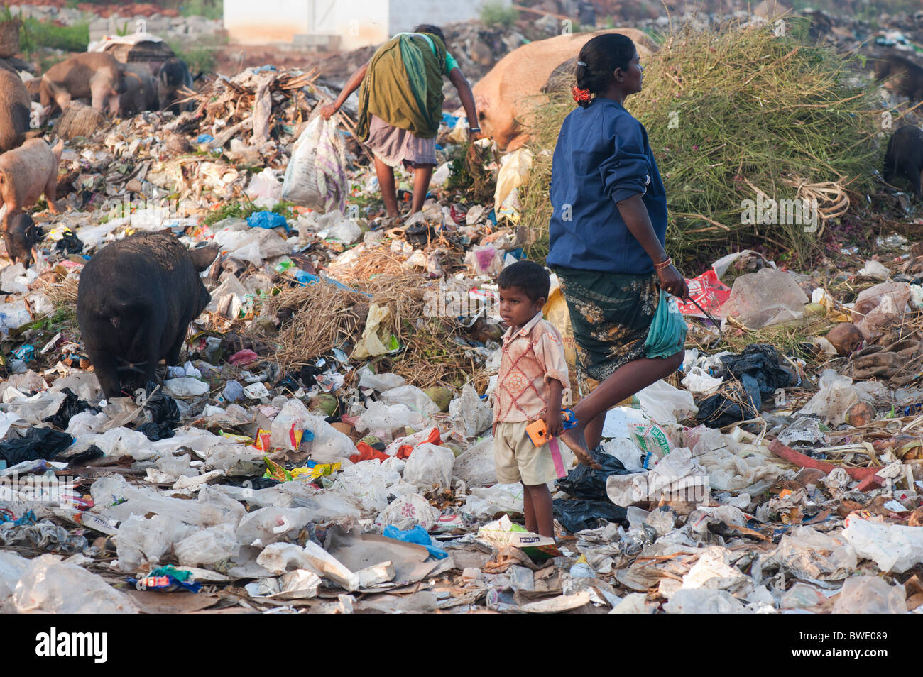 Poor Indian woman and child collecting pickings from a rubbish tip surrounded by pigs. Andhra Pradesh, India - Stock Image