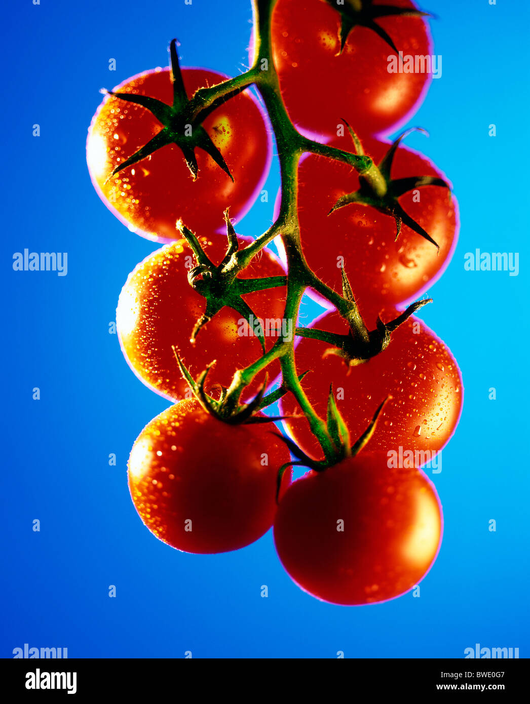 tomatoes abstract - Stock Image