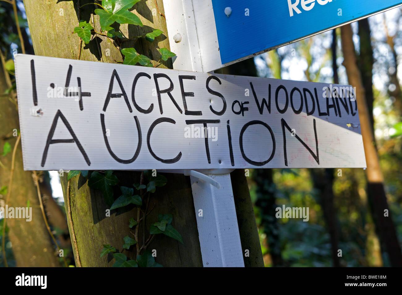 woodland up for auction in hampshire, england, uk - Stock Image