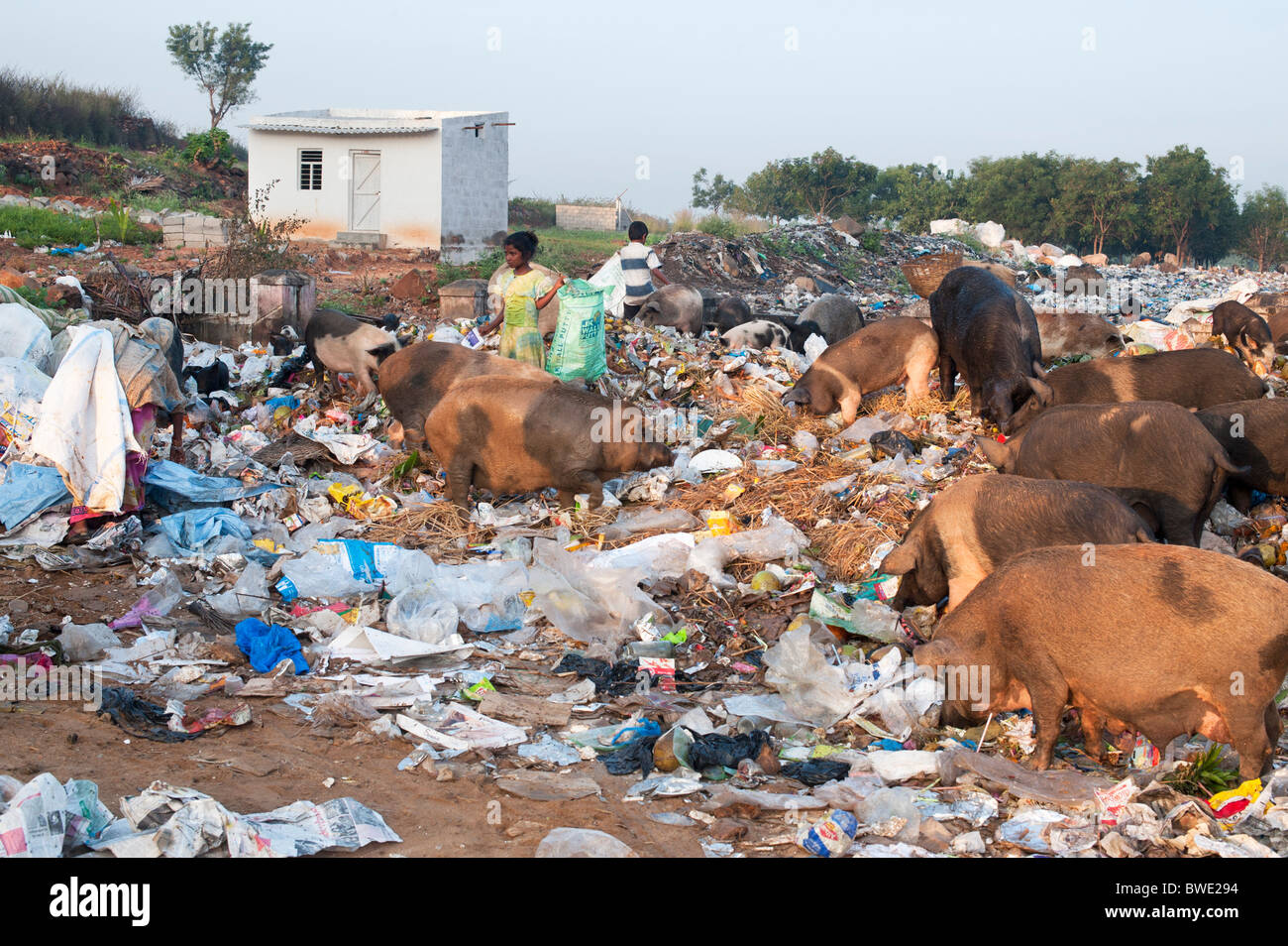 Poor Indian children collecting pickings from a rubbish tip surrounded by pigs. Andhra Pradesh, India Stock Photo