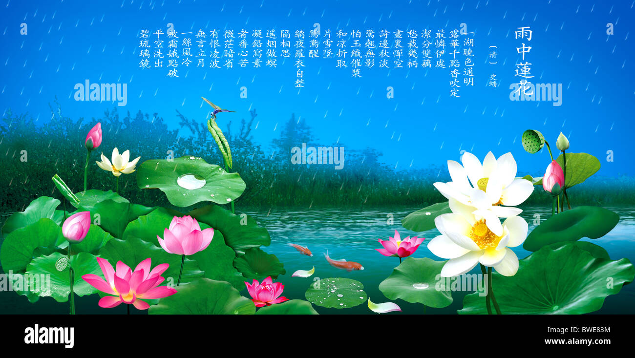 Lotus Rain Spring Ponds Dragonflies Goldfish Carp Lotus Leaf