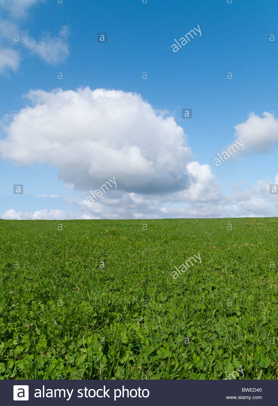 Meadow grass growing in field under blue sky - Stock Image
