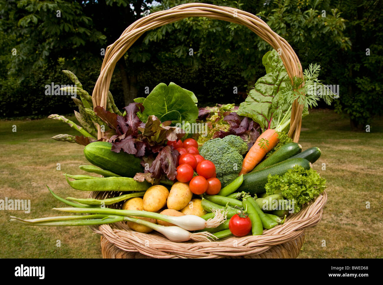 Colourful basket trug of locally grown freshly picked summer vegetables in country garden with trees in the Weald - Stock Image