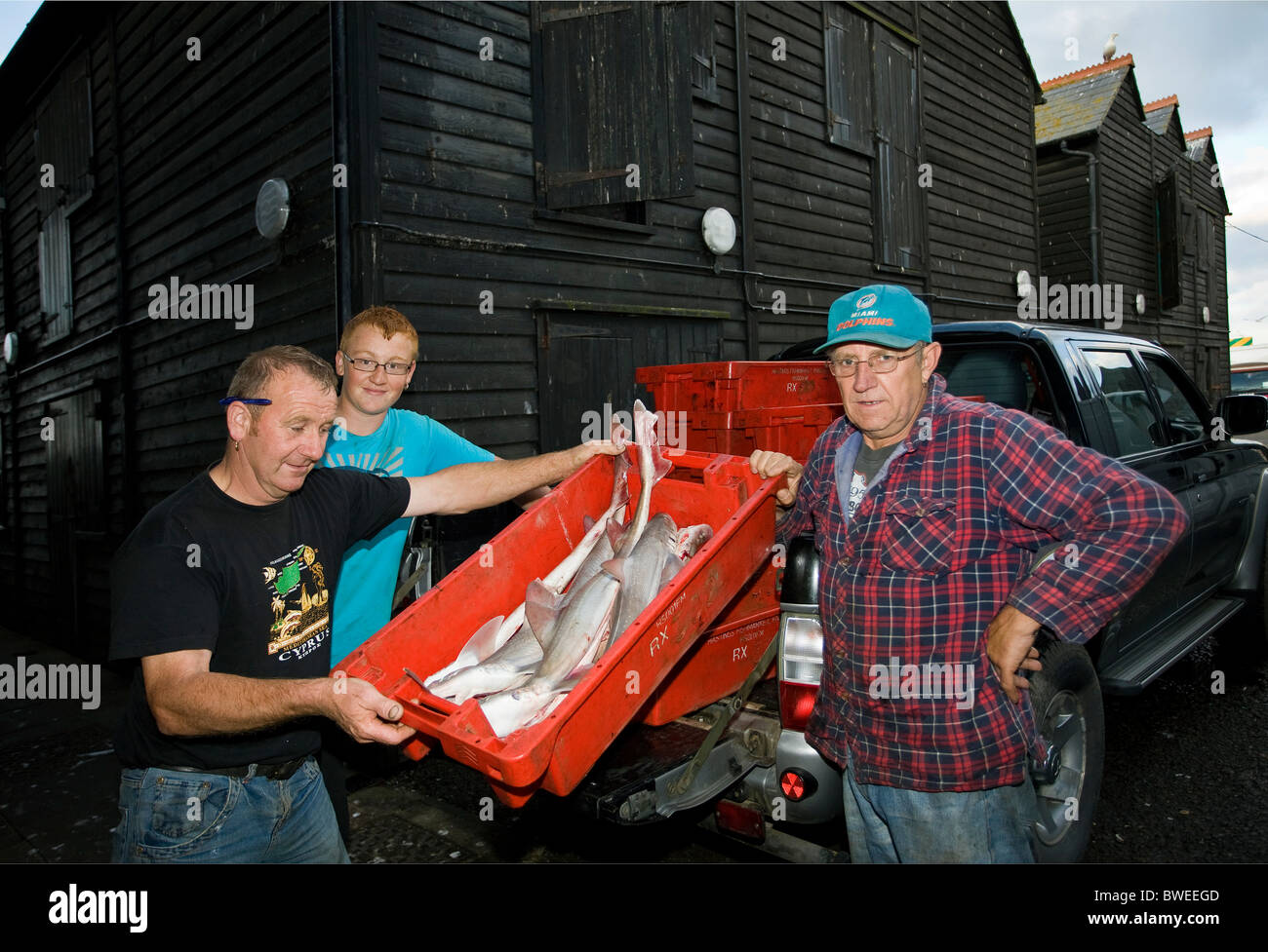 Hastings fishermen bring their nights' catch of fresh cod and plaice in crates to the fish market in Hastings - Stock Image