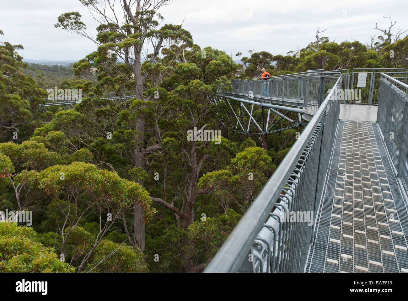 The Valley of the Giants Tree Top Walk  near Nornalup on the south coast of Western Australia. - Stock Image