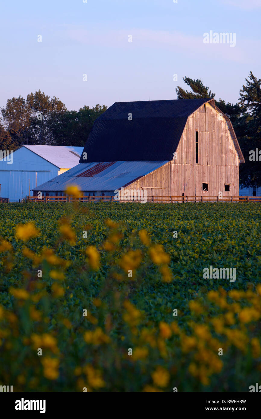 An old barn on a farm in Central Illinois. - Stock Image
